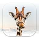Girafi