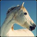Ecurie de la Brunerie à Mansigné - Pensions de chevaux